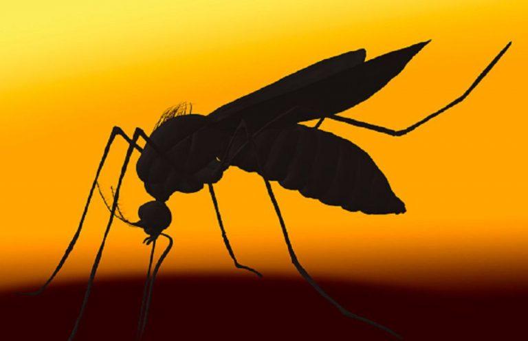 Comment éviter les piqûres de moustiques ? Une nouvelle montre connectée est la solution.